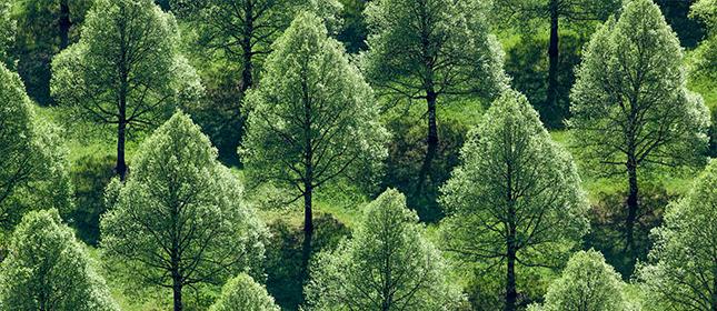 Update zur Anlagepolitik - Bäume